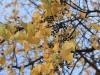 Рефтинский фото - Осень