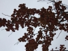Рефтинский фото - Яблочки