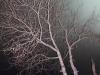 Рефтинский фото - Рефтинская ГРЭС, канал, дерево