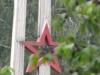 Рефтинский фото - Обелиск, звезда