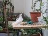 Рефтинский фото - Зимний сад