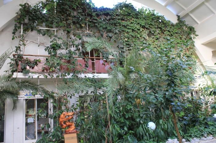 Зимний сад в ДК