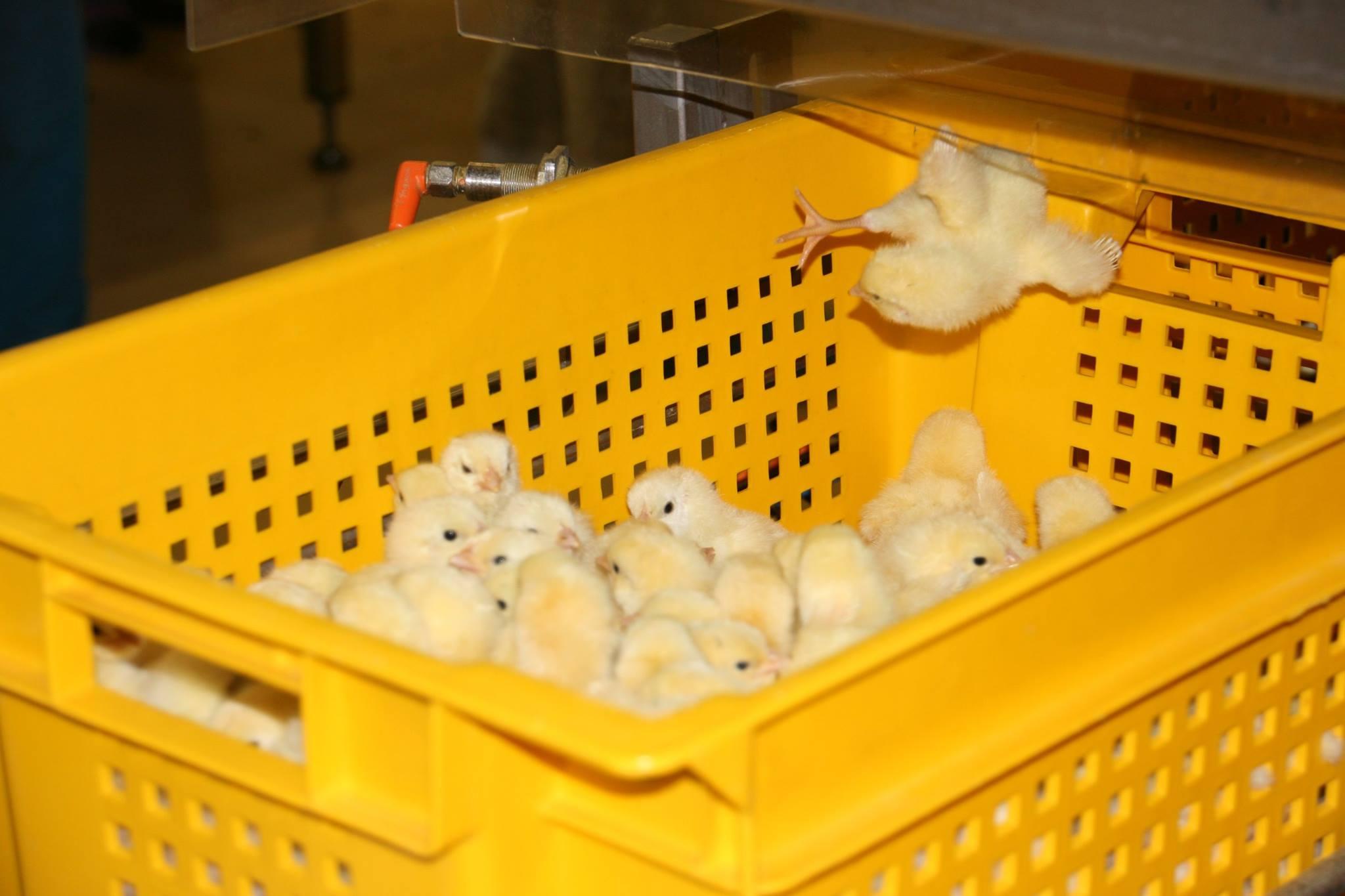 бизнес-план образец для глубокой переработки мяса птицы выпуск колбасы