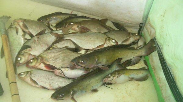 Отчет о рыбалке_21.01.16